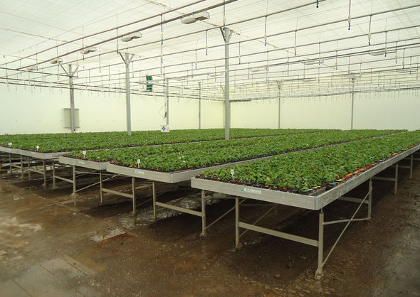 Cultivation tables